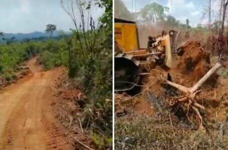 En el ojo del huracán la construcción de carretera y destrucción ambiental en La Mosquitia