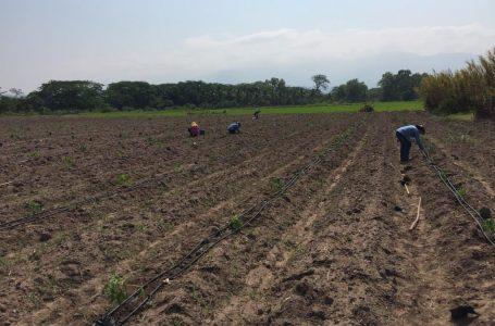 Productores preocupados por grosero aumento al precio de concentrados y fertilizantes