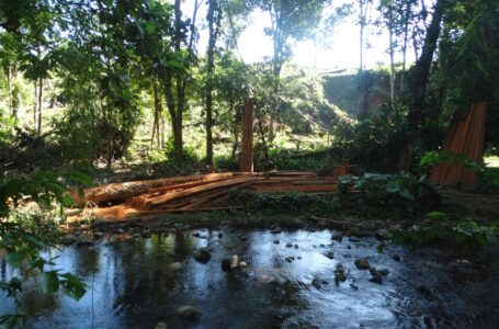 Frenar deforestación y sanear territorio, urgencias para salvar a Biosfera Río Plátano