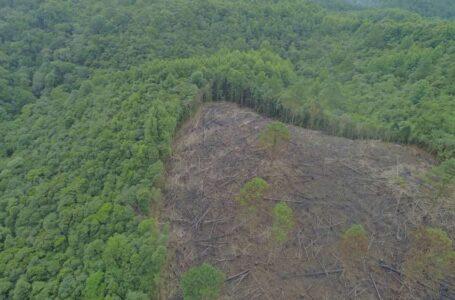 Deforestación amenaza reserva indígena en Lempira; exigen que ecocidio no quede impune