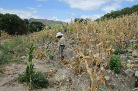 Productores temen pérdidas cuantiosas en siembra de primera por falta de lluvia