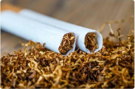El futuro de la nicotina: expertos se reúnen para discutir alternativas más seguras