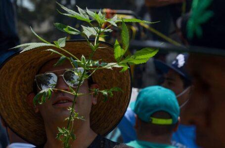 Suprema Corte de México despenaliza el uso lúdico de marihuana