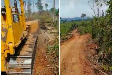 Alarma por construcción de carretera que dejaría serios daños en Biosfera del Río Plátano