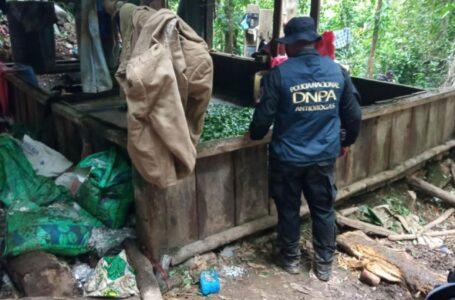 Aseguran plantaciones de coca y narcolaboratorio en Colón tras enfrentamiento
