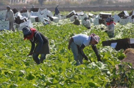 La mano de obra hondureña es apetecida por empresarios norteamericanos