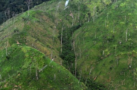 Debido a deforestación masiva, Biosfera del Rio Plátano podría desaparecer en los próximos 7 años