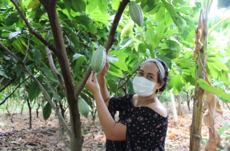 Productores de cacao y café orgánico mejoran producción y exportación