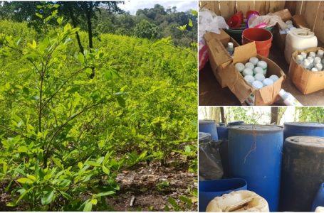 Unos 15 narcolaboratorios y más de 300 mil arbustos de coca destruidos en lo que va del año
